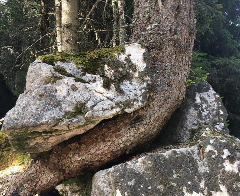 Zwischen Baum und Borke - www.expatmamas.de/expatmamas-blog/ #expatleben #imauslandzuhause #expatmamas