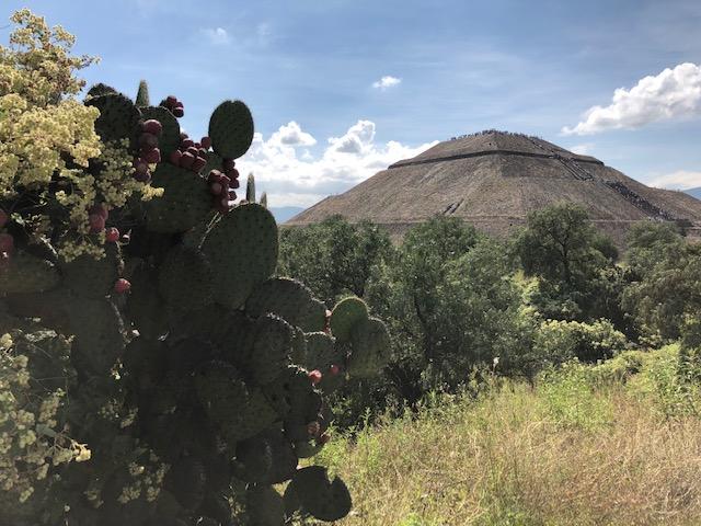 Neu in Mexiko-City - www.expatmamas.de/expatmamas-blog/ #lebeninmexiko #imauslandzuhause #expatleben